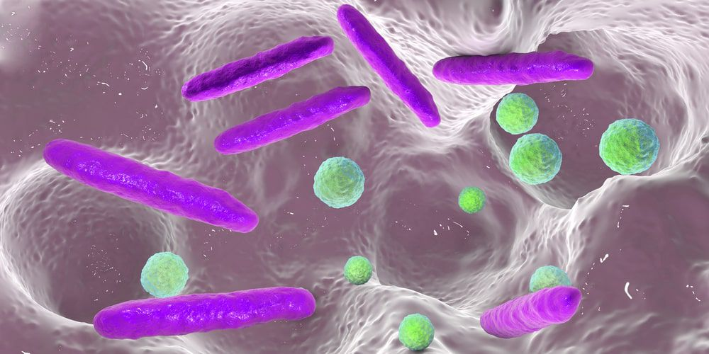 Tooth decay bacteria
