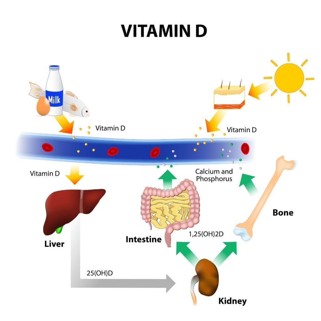 vitamin D synthesis in the body