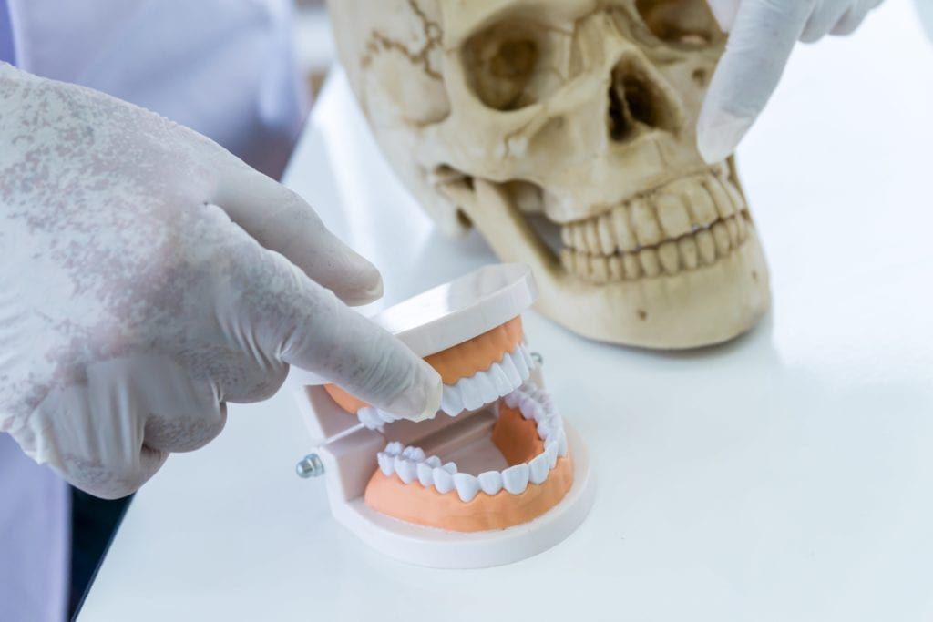 forensic dentist making comparisons